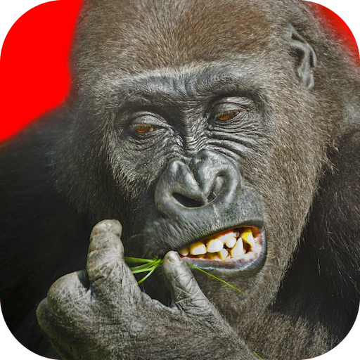 Flying Gorilla  Android Modded file download (Unlimited money,Mod) 2.108 apk no root
