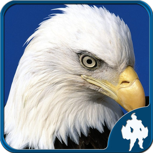 Birds Jigsaw Puzzles Game (Unlimited money,Mod) for Android 1.9.17