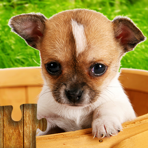 Dogs Jigsaw Puzzles Game – For Kids & Adults 🐶  (Unlimited money,Mod) for Android 26.3