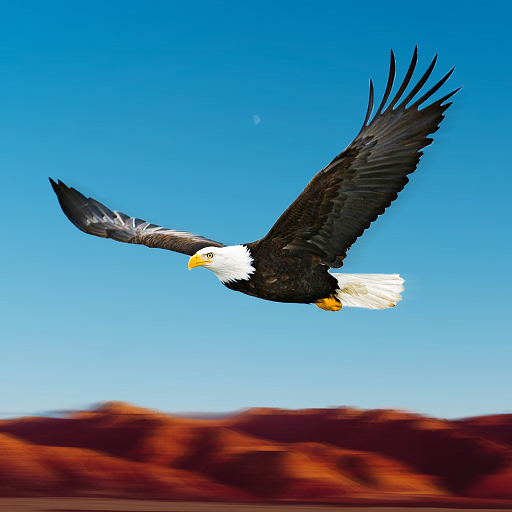 Bird Racing Simulator: Eagle Race Game 1.5 (Unlimited money,Mod) for Android