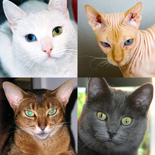 Cats Quiz – Guess Photos of All Popular Cat Breeds 3.1.0 (Unlimited money,Mod) for Android