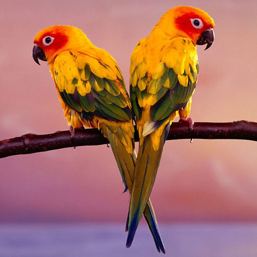 Birds Jigsaw Puzzles  (Unlimited money,Mod) for Android